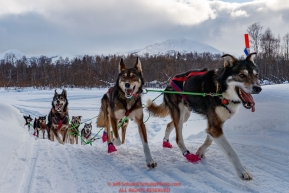 Emily Maxwell runs up the river bank in the afternoon at the Takotna checkpoint during the 2018 Iditarod race on Wednesday March 07, 2018. Photo by Jeff Schultz/SchultzPhoto.com  (C) 2018  ALL RIGHTS RESERVED