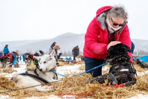 Volunteer veterinarian Tanja Kruse examines a Bradley Farquar dog at the Iditarod checkpoint on Friday, March 9th during the 2018 Iditarod Sled Dog Race -- AlaskaPhoto by Jeff Schultz/SchultzPhoto.com  (C) 2018  ALL RIGHTS RESERVED